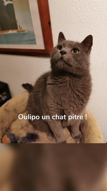 Oulipo un chat pitre !